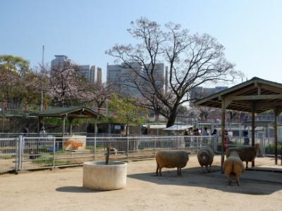 ふれあい広場。動物たちに手で触れることはもちろん、ヒツジの餌やりも体験できる。