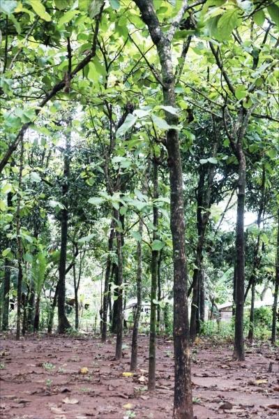 「木の宝石」とも呼ばれる世界三大 銘木のチーク。インドネシア政府公認の チーク材のみを使用。