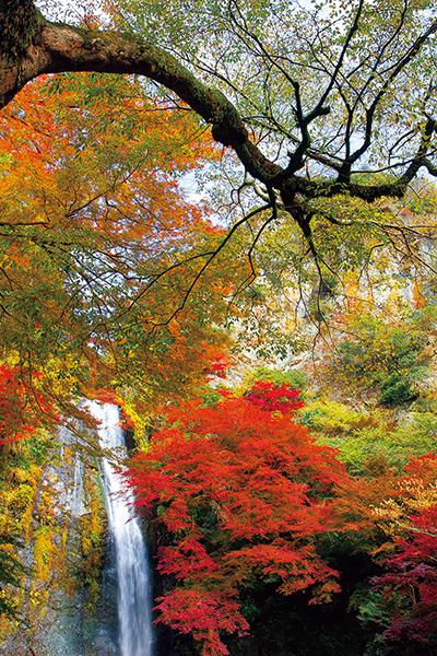 真っ赤に色付いた秋の様子も見事。